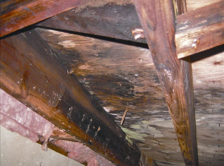 Mold And Rot In A Nashville Crawl E