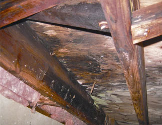 mold and rot in a Nashville crawl space
