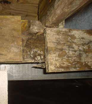Extensive basement rot found in Jackson by Frontier Basement Systems