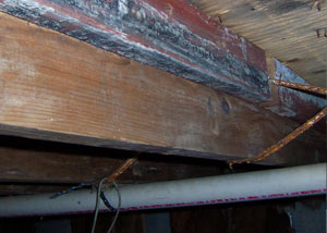 Rotting, decaying wood from mold damage in Hopkinsville